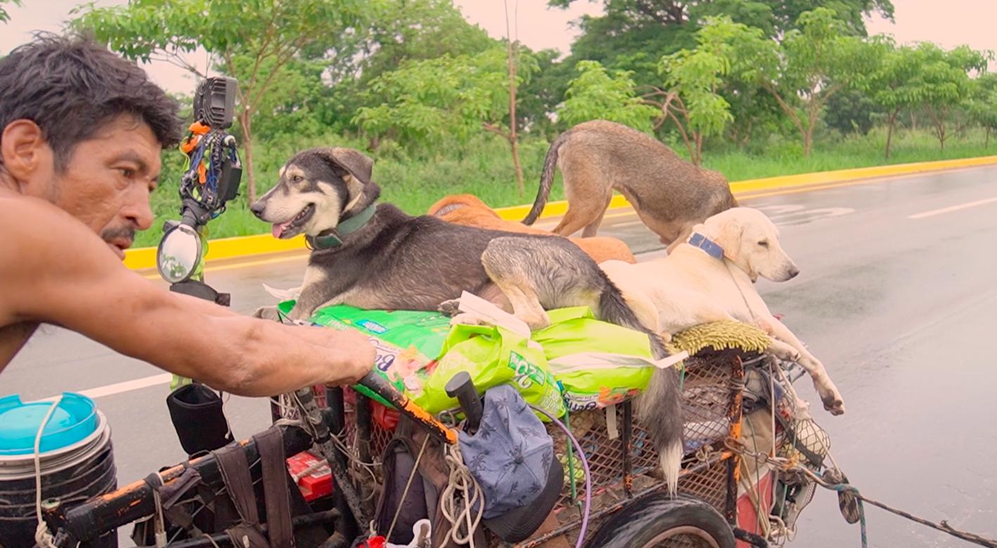 Un hombre recorre a pie todo México rescatando perros de la carretera