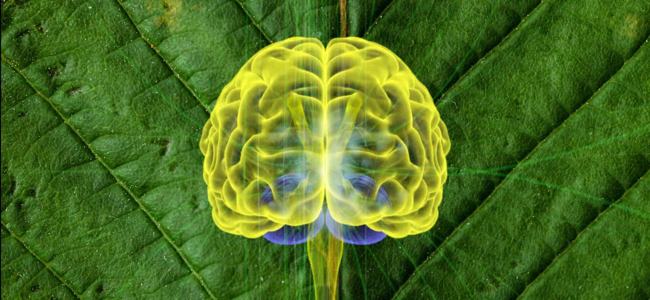 Descubren beneficios terapéuticos de la ayahuasca contra el Alzheimer