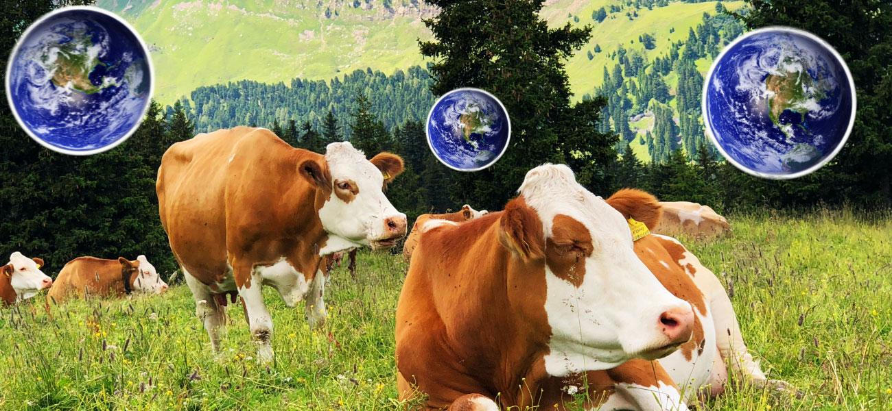 La carne orgánica puede ser tan contaminante como la que no lo es 🐮🌎