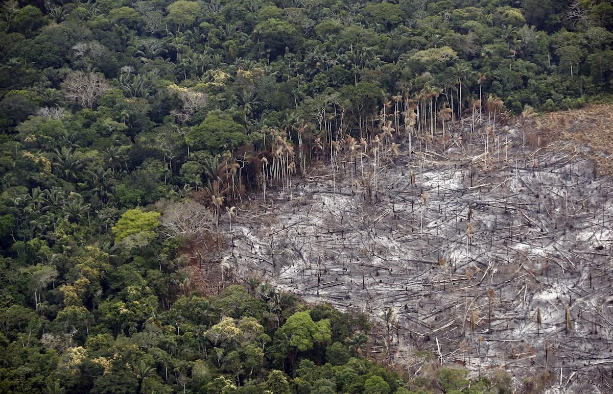 Imagina 60 millones de canchas de fútbol: algo así es lo que hemos deforestado en 13 años 😱