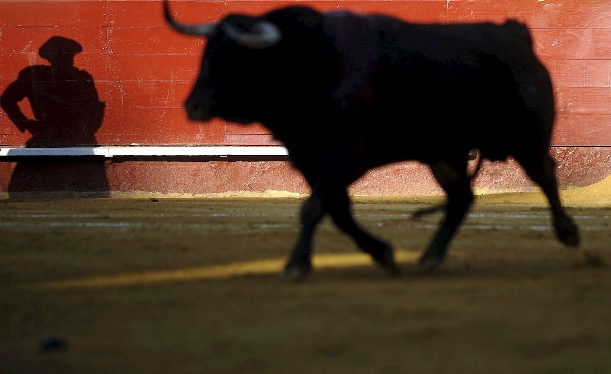 Quito prohíbe espectáculos con sufrimiento animal 🙌  Pero la «fiesta brava» se resiste a morir