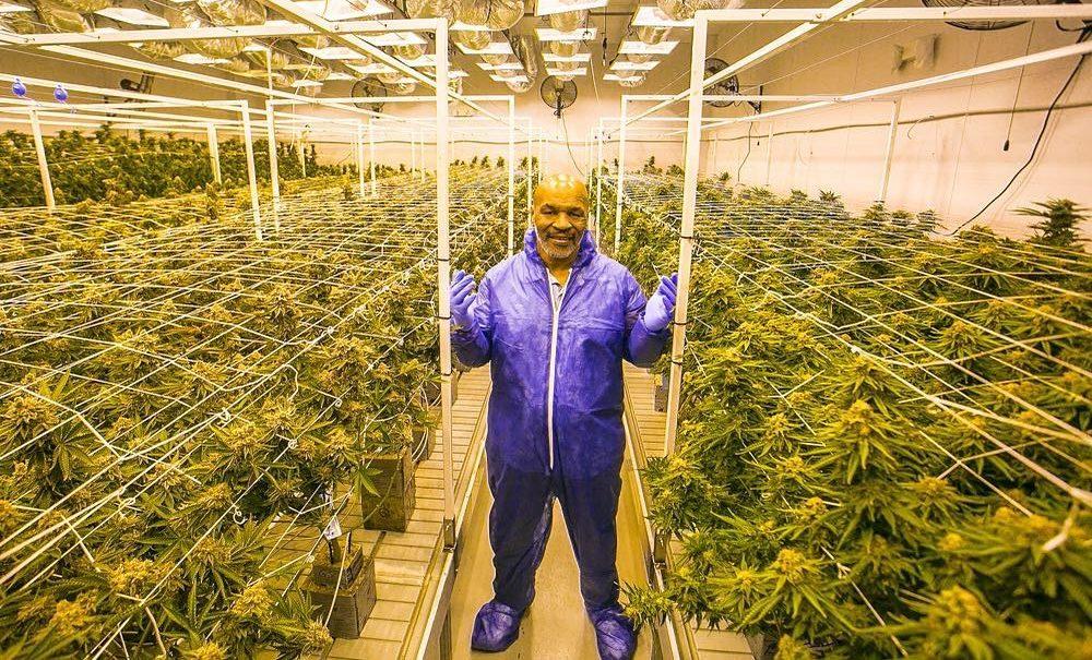 Mike Tyson sale de la quiebra gracias a la industria de la marihuana en California