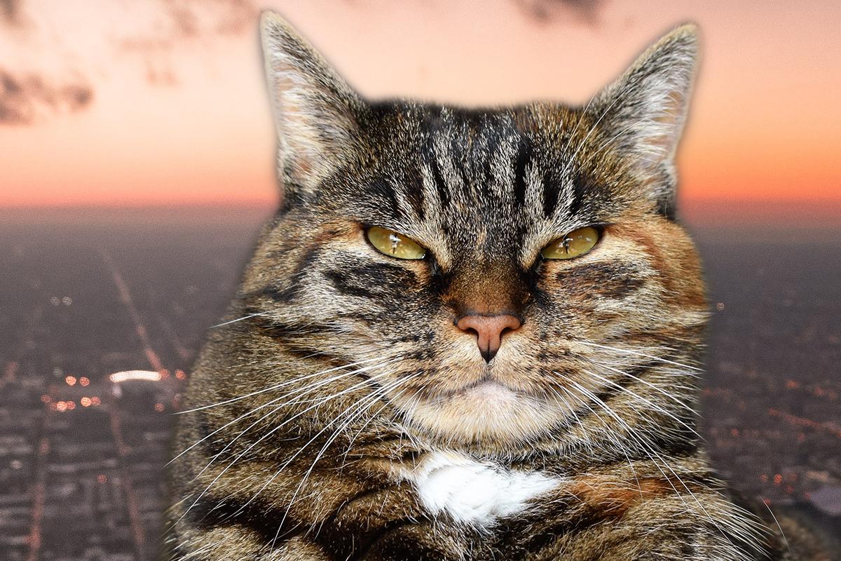 Los gatos son tan desleales como sospechabas, revela un estudio en Animal Behavior 🐱